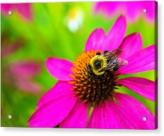 A Bee And Reverie Acrylic Print