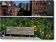 A Bench On The High Line In New York City Acrylic Print by Diane Lent