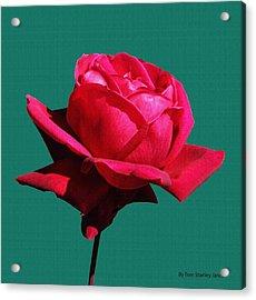 A Big Red Rose Acrylic Print