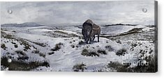 A Bison Latifrons In A Winter Landscape Acrylic Print