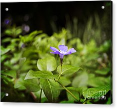 Acrylic Print featuring the photograph A Bit Of Purple by Maria Janicki