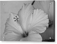 A Blending Flower Acrylic Print by Shweta Singh
