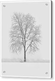 A Blizzard Moment Acrylic Print by Nancy Edwards