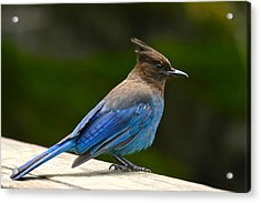 A Blue Moment Acrylic Print