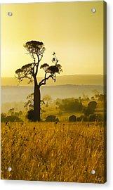 A Boab Sunrise Acrylic Print by Holly Kempe