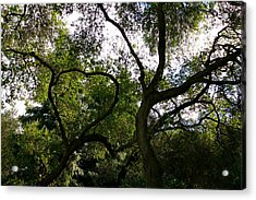 A Bough To Your Heart Acrylic Print