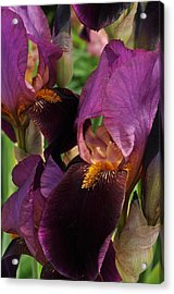 Acrylic Print featuring the photograph A Bouquet Of Lilies by Sabine Edrissi