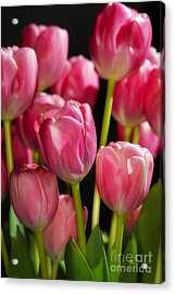 A Bouquet Of Pink Tulips Acrylic Print