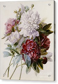 A Bouquet Of Red Pink And White Peonies Acrylic Print by Pierre Joseph Redoute