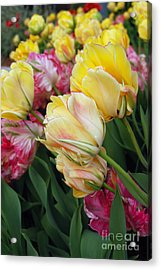 A Bouquet Of Tulips For You Acrylic Print by Eva Kaufman