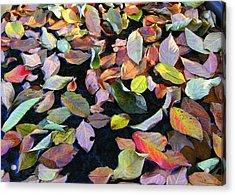 A Bowl Of Autumn Acrylic Print by Paula Tohline Calhoun
