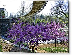 A Bridge To Spring Acrylic Print by Larry Bishop