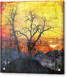 A Brilliant Observer Of Life Acrylic Print by Brett Pfister