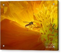 A Bug And A Green Inner Glow Acrylic Print