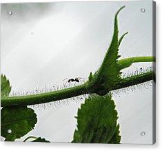 A Bugs Life Acrylic Print by Gopan G Nair