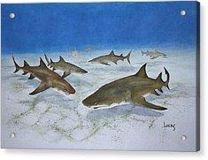 A Bushel Of Lemon Sharks Acrylic Print by Jeff Lucas