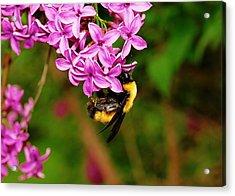 A Busy Bee Acrylic Print