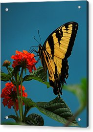 Acrylic Print featuring the photograph A Butterfly by Raymond Salani III