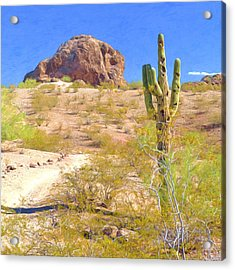 A Cactus In The Arizona Desert Acrylic Print