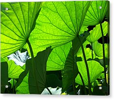 A Canopy Of Lotus Leaves Acrylic Print by Larry Knipfing