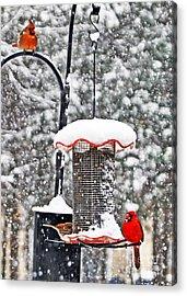 A Cardinal Winter Acrylic Print