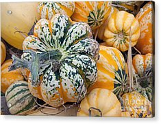 A Carnival Of Squash Acrylic Print by Minnie Lippiatt