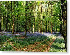 Acrylic Print featuring the photograph A Carpet Of Colour by Wendy Wilton