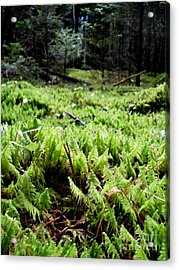 A Carpet Of Moss  Acrylic Print by Steven Valkenberg