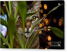 A Cat Hides Behind A Plant 2 Acrylic Print by Micah May