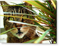 A Cat Hides Behind A Plant 3 Acrylic Print by Micah May