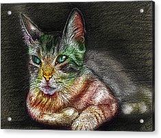 Savanna Cat  Acrylic Print by Remy Francis