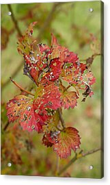 A Caterpillers Meal Acrylic Print