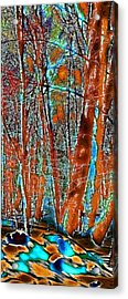 A Change In The Seasons Vi Acrylic Print by David Patterson