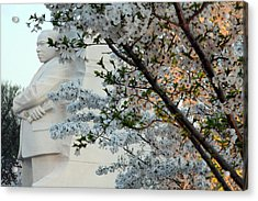 Acrylic Print featuring the photograph A Cherry Blossomed Martin Luther King by Cora Wandel