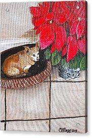 A Chihuahua Christmas Acrylic Print