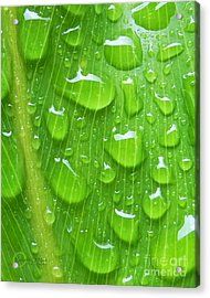 Acrylic Print featuring the photograph A Cleansing Morning Rain by Robert ONeil