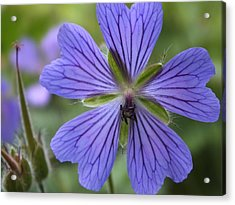 Acrylic Print featuring the photograph A Close Look 1 by Gene Cyr