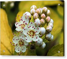 Acrylic Print featuring the photograph A Close Look 2 by Gene Cyr