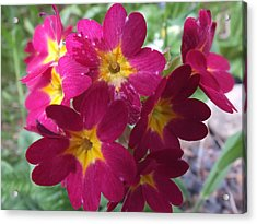 Acrylic Print featuring the photograph A Close Look 4 by Gene Cyr