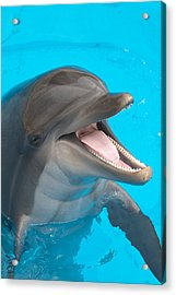 A Close-up Of A Happy Dolphin Swimming Acrylic Print by To_csa
