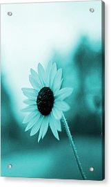 A Cold Sun Acrylic Print