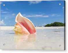 A Colorful Conch Shell Sits Acrylic Print