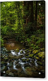 A Creek Among Giants Acrylic Print