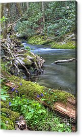 A Creek Side Hike Acrylic Print