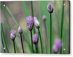 Acrylic Print featuring the photograph A Culinary Necessity by Debbie Oppermann
