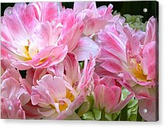 A Crowd Of Tulips Acrylic Print
