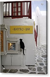A Curious Cat In Mykonos Acrylic Print