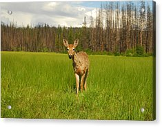 A Curious Friend Acrylic Print by Larry Moloney