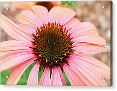 Acrylic Print featuring the photograph A Daisy For You by Elizabeth Budd