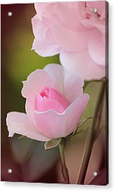 A Daughter Is Love Acrylic Print by The Art Of Marilyn Ridoutt-Greene